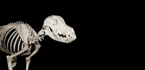 Cão pré-histórico é descoberto em Múrcia, na Espanha