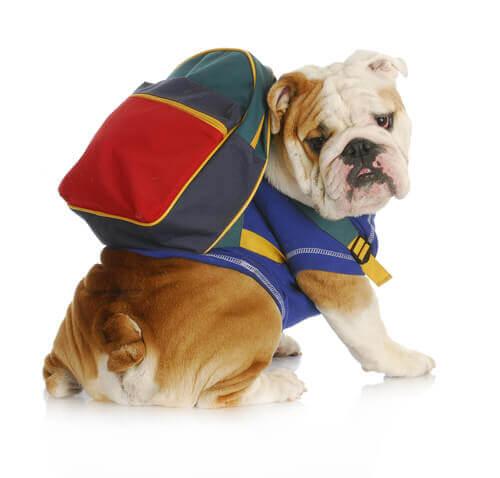 Dicas para escolher a mochila ideal para o seu cachorro