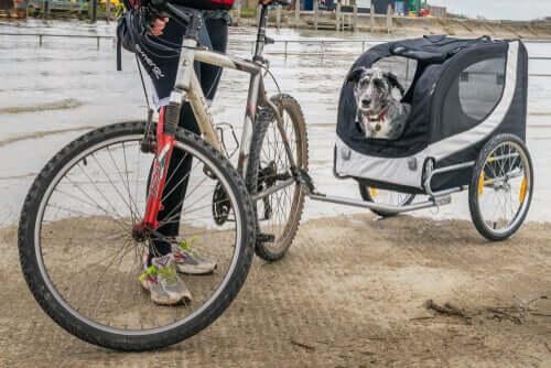Transportar um cachorro