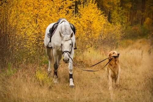 Cachorro e cavalo passeando na natureza
