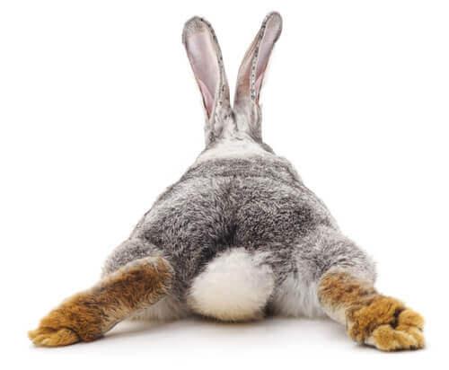 Diarreia em coelhos: o que devemos fazer?
