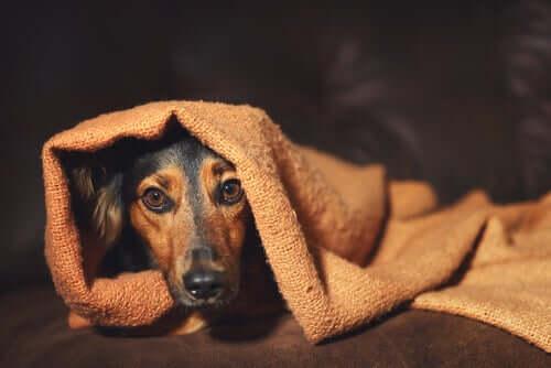Comportamento compulsivo em animais de estimação