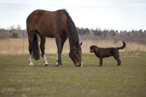 Cachorro e cavalo juntos
