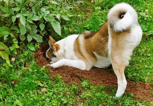 5 dicas para evitar que os cachorros danifiquem o jardim
