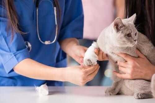 As doenças mais comuns em gatos