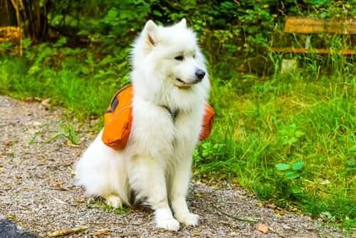 4 dicas para escolher a melhor mochila para cães