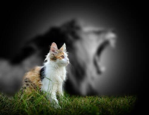 A razão pela qual os gatos não rugem como os leões