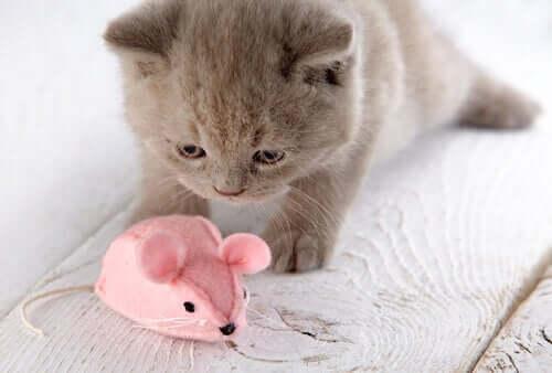 Gatinho com rato de brinquedo