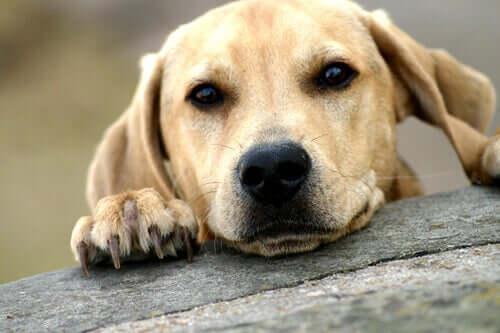 Cachorro esperando para ser adotado