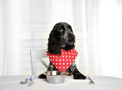 Cachorro esperando sua comida