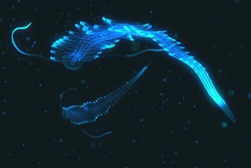 Processo químico por trás da bioluminescência