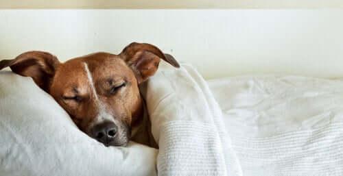 Cachorro dormindo tranquilamente