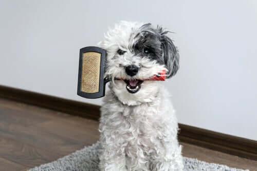 Cão com escova na boca