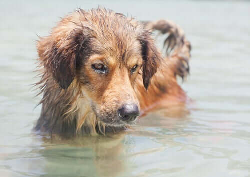 A água do mar é perigosa para os cães?