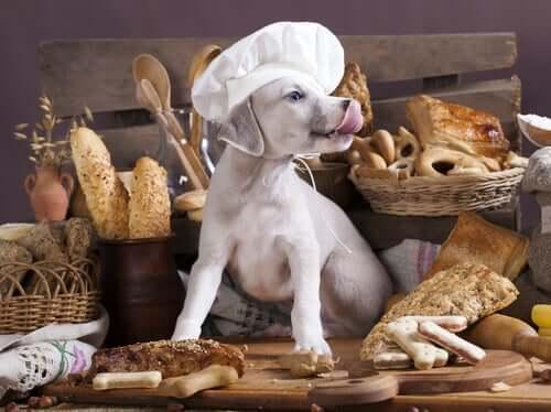 Os carboidratos fazem mal aos cães?