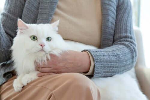 Como a velhice afeta o comportamento dos gatos
