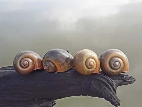 Como ocorre a reprodução do caracol?