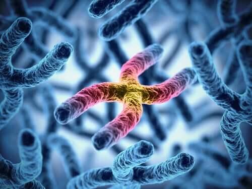Longevidade dos cromossomos