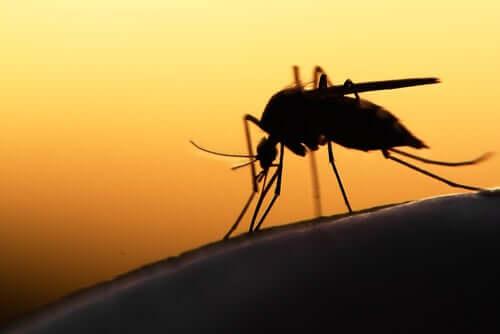 7 curiosidades sobre os mosquitos