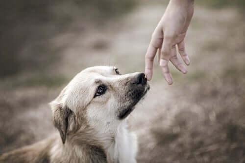 Vínculo entre cães e humanos