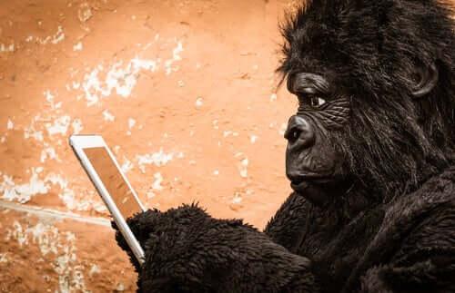Gorila usando celular
