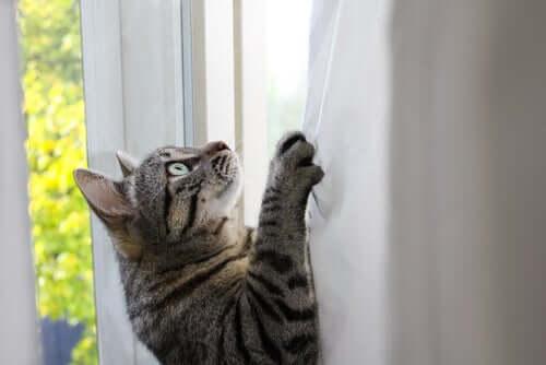 Por que os gatos são tão flexíveis?