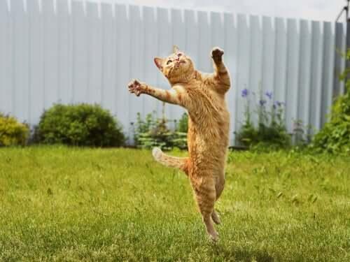 Gato pulando no jardim
