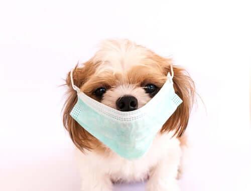 As 6 infecções caninas mais contagiosas