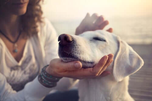Estudos científicos confirmam a conexão entre cães e seus donos