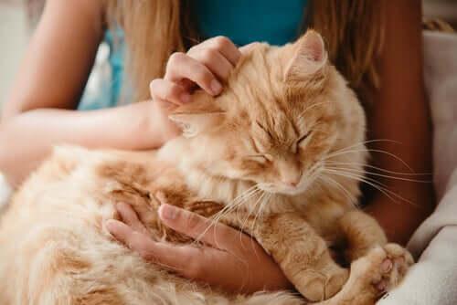 Mulher acariciando seu gato