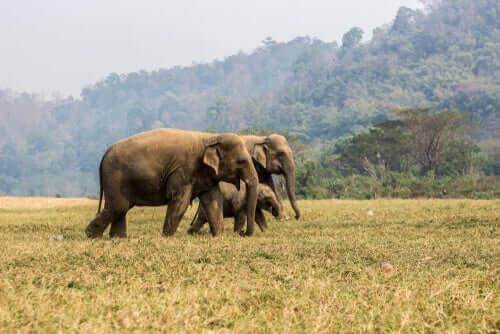 Onde vivem os elefantes-asiáticos?