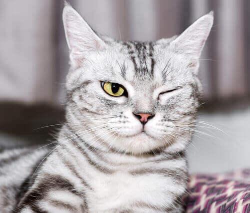 A saúde ocular dos gatos