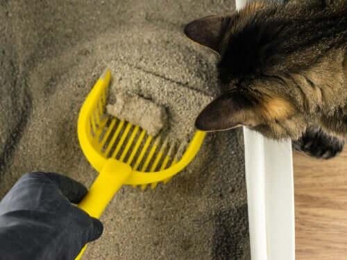 Recolher as fezes dos gatos da caixa de areia
