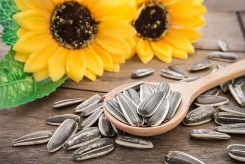 3 benefícios das sementes de girassol para animais de estimação