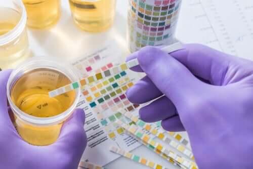 Exame de urina em cães