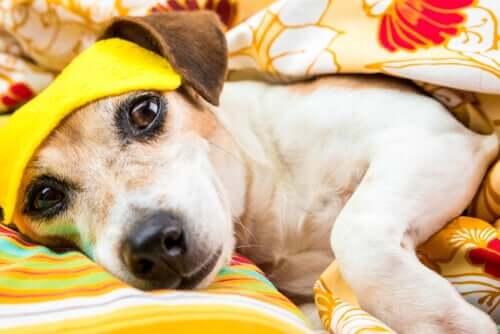 Distúrbios do sono em cães: tudo que você precisa saber