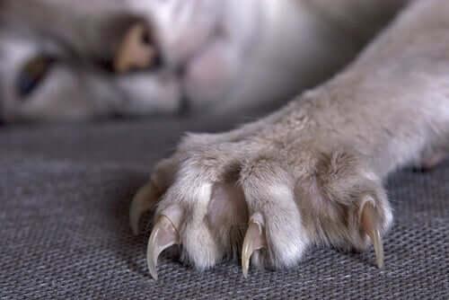 As patas de um gato