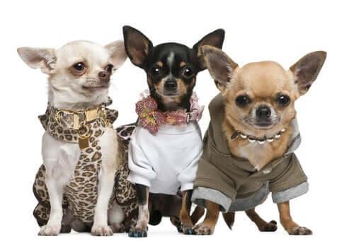 4 dicas para alimentar e vestir seu animal de estimação sem gastar muito