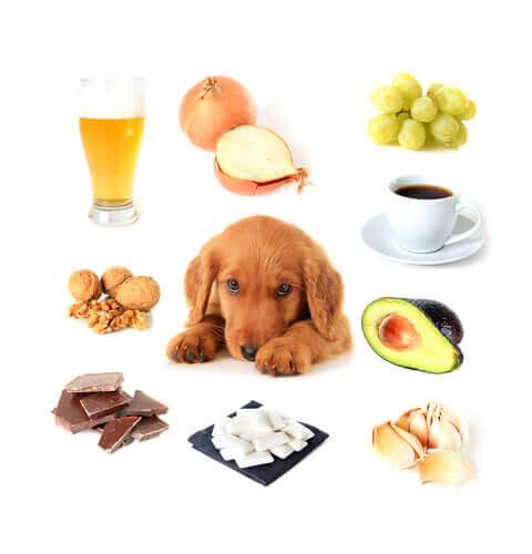 Quais alimentos são tóxicos para os cães?