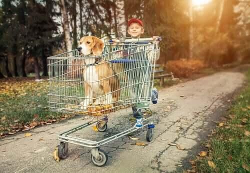 Menino empurrando seu beagle