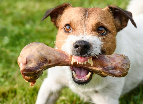 Agressividade em cães relacionada à comida