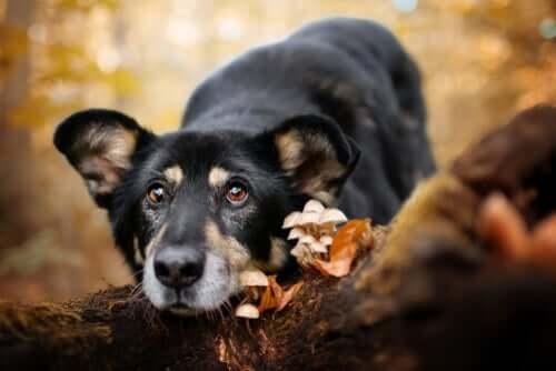 Cachorro deitado em cogumelos selvagens