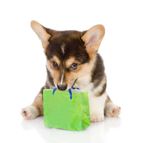 Evite ser enganado ao comprar um cachorro de raça