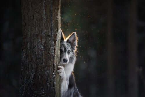 Cachorro se escondendo atrás de árvore