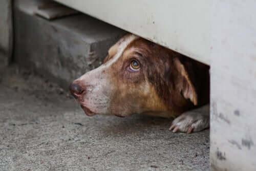 Cachorro escondido