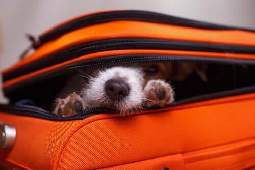 Por que os cachorros se escondem?