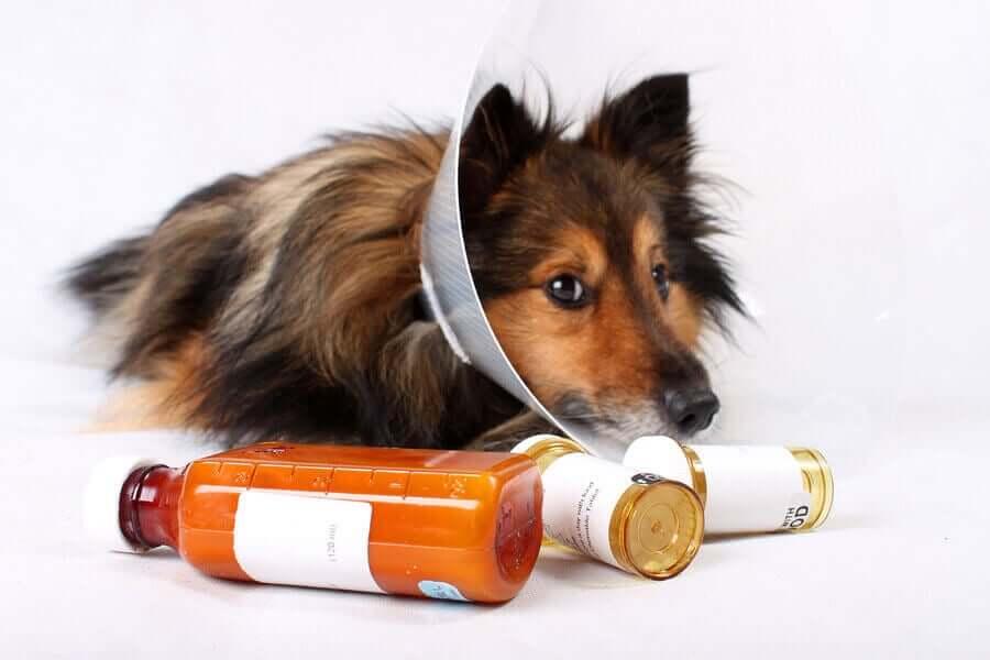 Prescrição e uso responsável de medicamentos veterinários