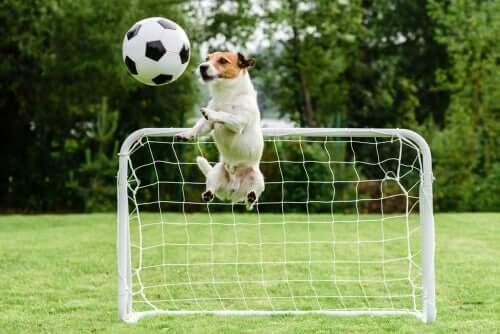 Cachorro jogando futebol