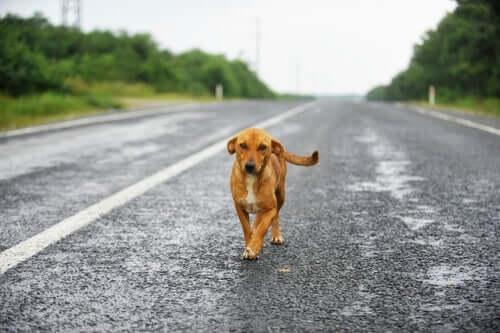 Cachorro abandonado na estrada