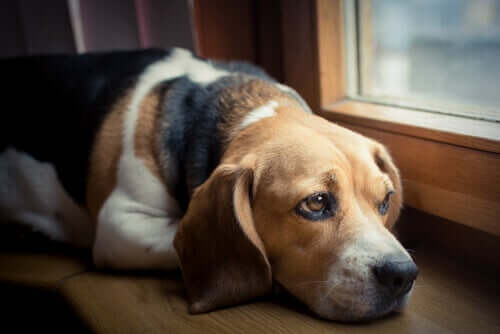 Cachorro doente em casa